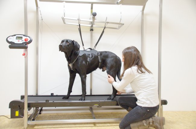 theravet dogpacer therapy unit